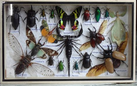 Thailand Insects &Butterflies frame