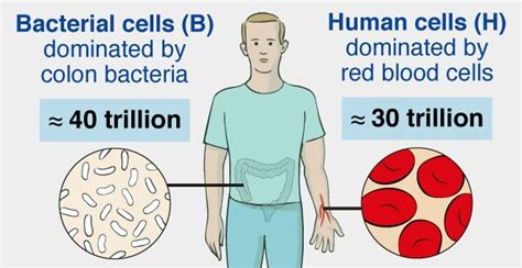 Germs, Humans and Numbers - Life Sciences - News, Features